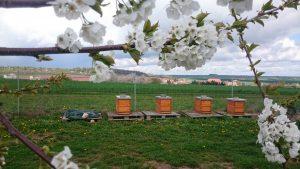 4 Bienenvölker